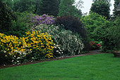 Garden of shrubs in spring with Rhododendron (Rhododendron sp), viburnum (Viburnum sp), smoketree (Cotinus sp), lawn, private garden, Belgium