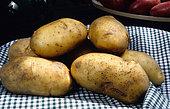 Potato 'Béa du Roussillon' (Solanum tuberosum), Organic Vegetable