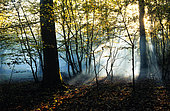 Forest in autumn, sunbeams in the mist