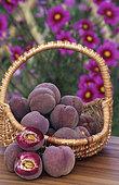 Pêche 'Sanguine vineuse' (Prunus persica). Automne