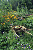 Flowered organic vegetable garden: Wheelbarrow and Basket with different vegetables from the garden ...
