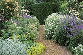 Gravelled alley: Geranium (Geranium sp), Masterwort (Astrantia major), Rose (Rosa sp), Alpine lady's mantle (Alchemilla mollis), Coton Manor, England.