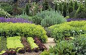 Flowered vegetable garden: Salads (Lactuca sativa), Alpine Lady's mantle (Alchemilla mollis). Sagebrush (Artemisia sp), Parc Floral de Haute Bretagne, France.