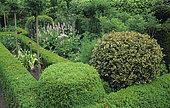 Boxwood (Buxus sp), Variegated holly (Ilex sp), Garlic (Allium sp), Bistort (Polygonum bistorta). Private garden, Belgium.