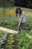 Young girl hoeing rows of Beans (Phaseolus vulgaris) and Celery (Apium graveolens) in a vegetable patch