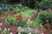 Garden scene, Lawn, Pruned hedge and Perennial mass: Red valerian (Centranthus ruber) and Pelargonium pot (Pelargonium sp) in summer. Coton Manor, Northamptonshire, England