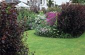 Lawn, Hedge and border with Geranium (Geranium sp) in bloom, House of Pitmuies Garden, Scotland