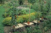 Organic flowery vegetable garden.