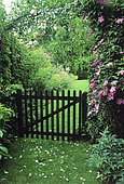 Entrance to the garden: Wooden gate and Clematis (Clematis sp) 'Comtesse de Bouchaud' in summer
