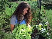 Young woman harvesting vegetables in a vegetable garden: Salad, Beet 'Rouge de Détroit'.