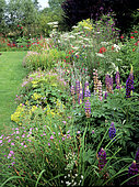Perennial flower bed in summer with Lupine (Lupinus sp), Geranium (Geranium binium), Rose campion (Lychnis coronaria), Poppy (Papaver sp), Verbena (Verbena sp)