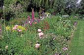 Spring flower bed: Oriental poppy (Papaver orientalis), Geranium (Geranium sp), Foxglove (Digitalis sp), Private garden, Belgium