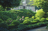Boxwood topiary (Buxus sp) and English ivy (Hedera helix), Garden of Piet Bekaert, Bruge, Belgium