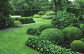 Boxwood topiary (Buxus sp) and English ivy (Hedera helix), Lawn. Madame de Witte's garden, Belgium
