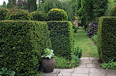 Yew hedge (Taxus baccata) and lawn path, Great Comp Garden, Kent, England.