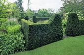 Yew hedge (Taxus baccata), Private garden in Belgium