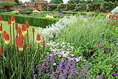 Flower bed with Tritoma (Kniphofia sp), Rose (Rosa sp)..., Packwood House, England