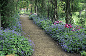 Covered alley and arbor. Caucasian forget-me-not (Brunnera macrophylla) and Tulip (Tulipa sp), Rousham Garden. England.