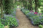 Covered alley, Largeleaf brunnera (Brunnera macrophylla) and Tulip (Tulipa sp), Rousham Garden, Oxfordshire, England.