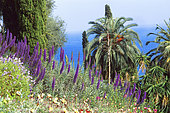 Landscape with Pride of Madeira (Echium fastuosum) and Palm trees, Mediterranean Sea.