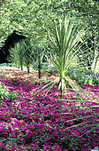Bed of Impatiens (Impatiens sp) and Cabbage Tree (Cordyline australis), La cour d'Aron, Vendée, France