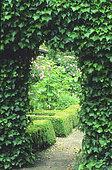 Garden entrance. English Ivy (Hedera helix)