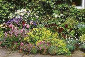 Flowered pmots with Dianthus (Dianthus sp), Alpine lady's mantle (Alchemilla mollis), Diascia (Diascia, sp), Zonale Geranium (Pelargonium x hortorum), Abutilon (Abutilon sp)