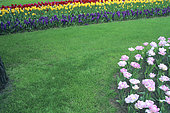 Lawn bordered by spring bulb bed : Tulip (Tulipa sp), Muscari (Muscari sp)