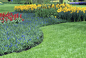 Ornamental lawn bordered by beds of spring bulbs with Muscari (Muscari sp), Narcissus (Narcissus sp)