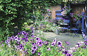 Flowered terrace with Petunia (Petunia x hybrida) 'Blue Daddy', courtyard garden in summer, Garden Mr. and Mrs. Vuylsteke, Belgium.