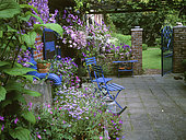 Small courtyard flowered with perennial Geranium (Geranium sp), Clematis (Clematis sp), Lobelia (Lobelia), Italian aster (Felicia amelloides), Pansy (Viola sp), Petunia (Petunia sp) in summer, Private garden of Mr and Mrs Vuylstreke , Belgium