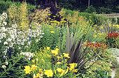Yellow flower bed with Phormium (Phormium sp), Fernleaf yarrow (Achillea filipendulina) 'Gold Plate', Milky Bellflower (Campanula lactiflora), Hemerocalle (Hemerocallis sp) in summer, Le Château de Touffu, France