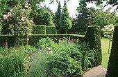 Summer massif with Rose (Rosa sp) 'Albertine', Lavender (Lavandula sp), Rose campion (Lychnis coronaria), Kousa dogwood (Cornus kousa) and cut hedge