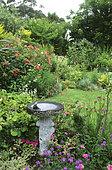 Birdbath, Waterhole and Alstroemeria (Alstroemeria sp), Verbena (Verbena x hybrida) in a natural style garden