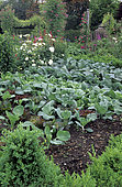 Flowery Vegetable garden with Rosemary (Rosmarinus officinalis), Boxwood (Buxus sp), Capucine (Tropaeolum sp), Alchemilla molle (Alchemilla mollis), Endive (Cichorrum endivia), Rose (Rosa sp)