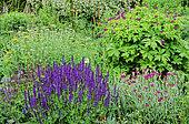 Flowering Perennial Spring bed with Woodland sage (Salvia nemorosa,Cranesbill (Geranium psilostemon), Achillea (Achillea sp), Pink (Dianthus )