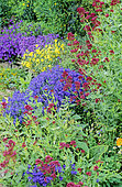 Flowering Perennial Spring bed with Red Valerian (Centranthus ruber), Speedwell(Veronica sp)