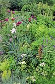 Flowering Spring Perennial bed with Poppy (Eastern Papaver) 'Mrs Marrow's Plum' (Poppy) and Iris, Walnut Tree Garden, Kent, England