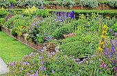 Flowering Spring Perennial bed with Larkspur (Delphinium sp), Russell's Phlomis, Jerusalem Sage (Phlomis russeliana) and Perenial Geranium (Geranium sp), Packwood House, England