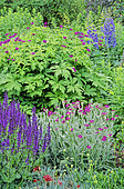 Perennial Flowerbed with Woodland Sage (Salvia nemorosa), Perennial Geranium (Geranium psilostemon), Larkspur (Delphinium sp), Spring-Summer