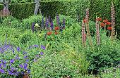 Perennial Flowerbed with Perennial Geranium (Geranium sp), Lupine (Lupinus sp), Poppy (Papaver sp), Penshurst Place, Kent, England, Spring-Summer