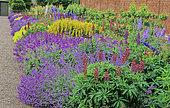 Perennial Flowerbed with Lupine (Lupinus sp), Catnip (Nepeta sp), Perennial Geranium (Geranium sp), Large yellow loosestrife (Lysimachia punctata), Floors Castle, Scotland, Spring-Summer