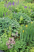Perennial Flowerbed with Funkia (Hosta sp), Iris (Iris sp), Primrose (Primula sp), Spring-Summer