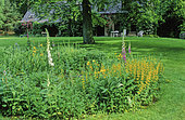 Perennial Flowerbed and Border with Large yellow loosestrife (Lysimachia punctata), Foxglove (Digitalis sp), Mrs Biebuyck's Garden, Belgium, Spring-Summer