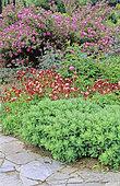 Perennial Flowerbed and border with Rock Rose (Cistus sp), Columbine (Aquilegia sp), Butterfly Stonecrop (Sedum spectabilis), Spring