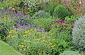 Perennial Flowerbed with Yarrow (Achillea sp), Perennial Geranium (Geranium sp), Misery, Virginia Spiderwort (Tradescantia virginiana), Poppy (Papaver sp), Spring-Summer