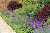 Perennial Flowerbed with Perennial Geranium (Geranium sp), Creeping Charlie (Nepeta sp), Japanese Barberry (Berberis thunbergii) 'Atropurpurea'), Boxwood (Buxus sp), Spring-Summer
