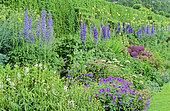 Perennial Flowerbed with larkspur (Delphinium sp), Masterwort, (Astrantia sp), Ornamental Garlic (Allium sp), Spring-Summer