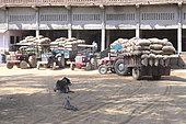Problème du stockage à long terme des pommes de terre en Inde dans le but de minimiser les pertes dues aux processus physiologiques (transpiration, respiration, germination) et de lutter contre les maladies de conservation et les ravageurs. L'inde manque d'entrepôts et des files d'attente de plusieurs jours sont nécessaires au cultivateurs pour faire stocker leurs cultures. Etat de Uttar pradesh et Rajasthan, Inde
