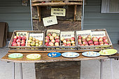 Stall of apple tasting in an orchardautomne , Pas de Calais, France